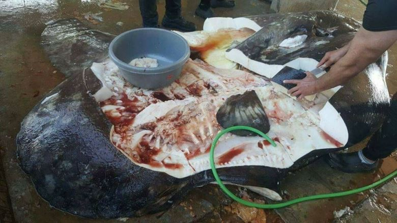 A Mola Mola fish was caught and killed in Tripoli - Her only fault is that she passed near Lebanon...