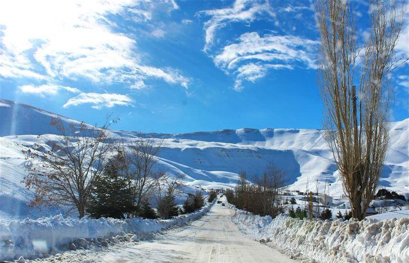 lebanoninapicture lebanonshots lebanoncedars snow naturelovers ...