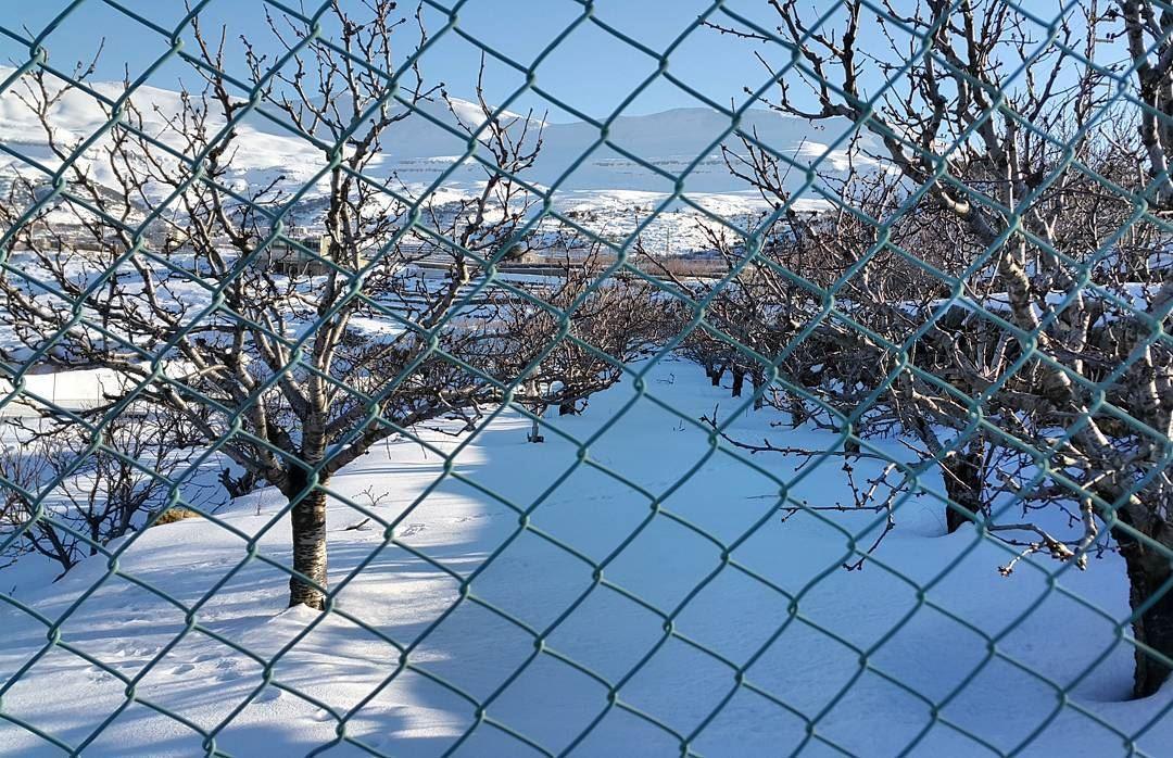 snow garden trees gardening bestoftheday igcapturesclub ...