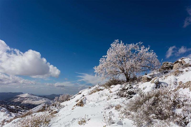 snow tree reserve ainzhalta shouf lebanon instalebanon ... (Ain Zhalta - Bmohray Cedars)