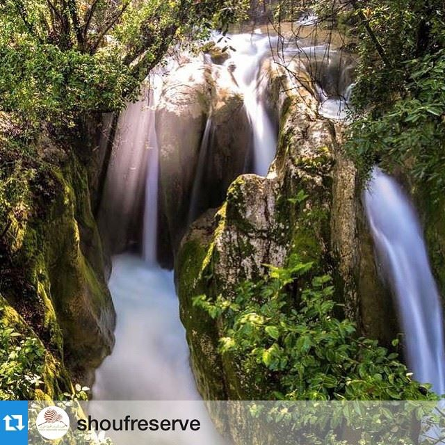 Repost @shoufreserve with @repostapp. ・・・ They say if you want to...