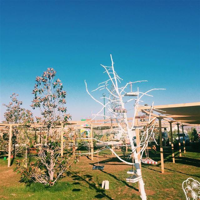 Books grow on trees in @cascadapark (Cascada Village)