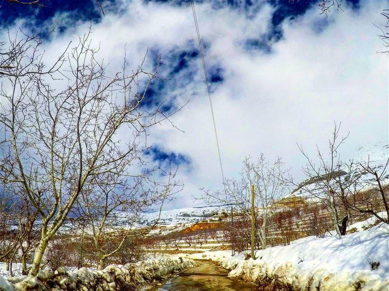 White morning roadtrip snow snoweverywhere trees🌳 treeoflife ...