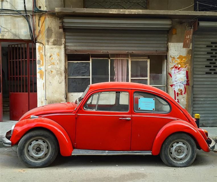 How gorgeous is she ? 🐞❤️ beetlebug red hot love picoftheday ... (Mar Mikhael, Beirut)