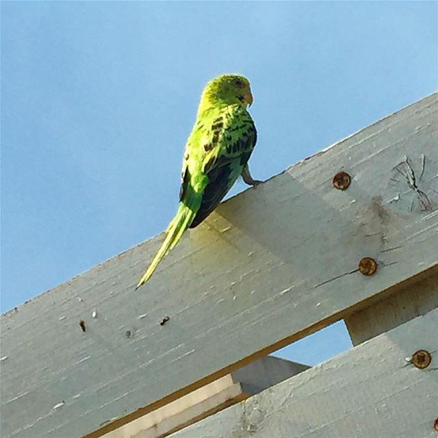 Rare to find 🐧 bird sky freedom colorful green rare lebanon ...