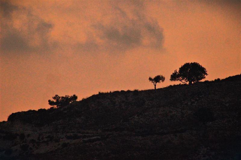 dusk Lebanon Dalhoun Mountain trees nature sky ...