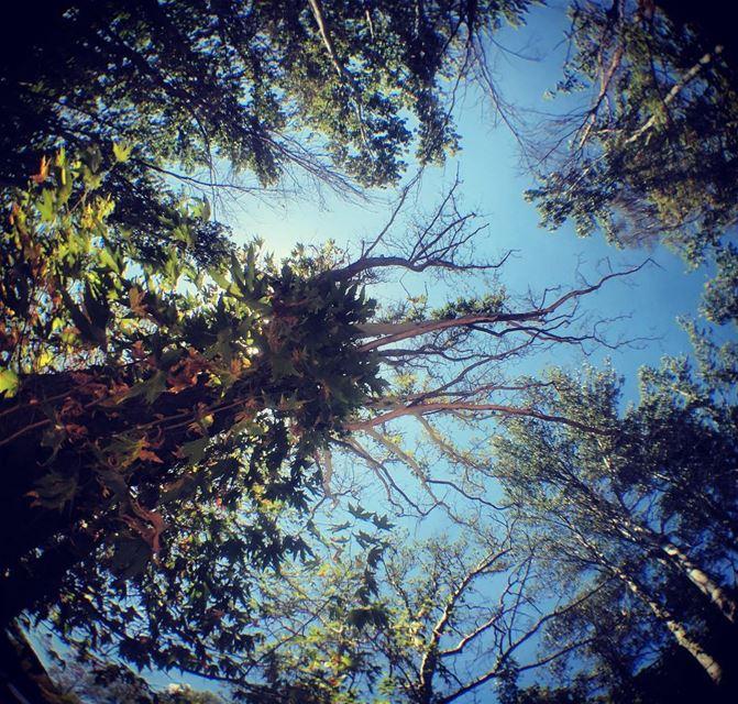lebanon trees nature sky ... (Taanayel Lake)
