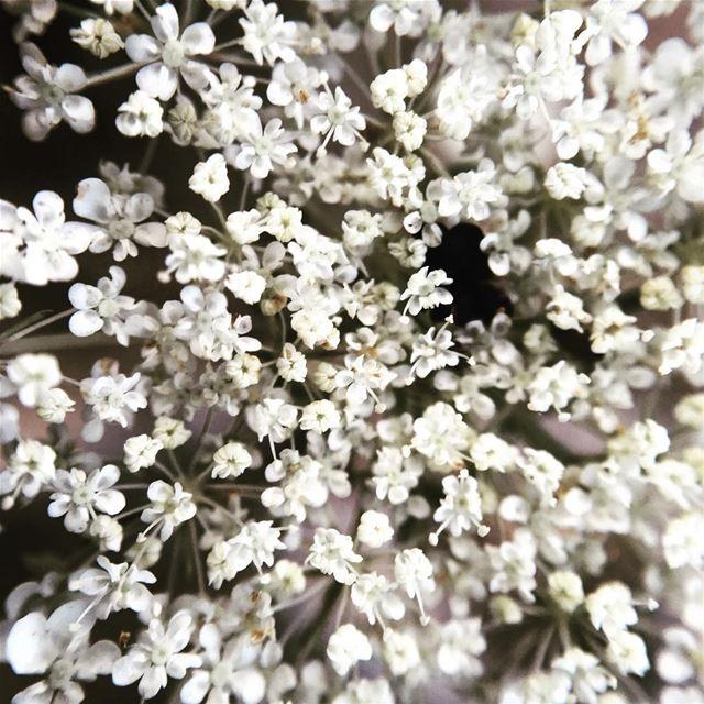flowers background lebanon ...