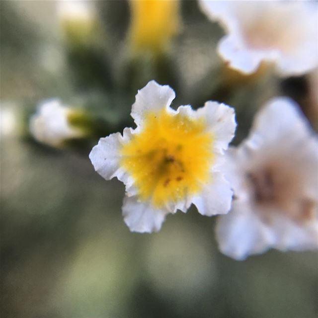 macro zoom yellow white flower nature ...