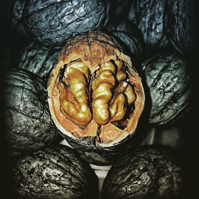 walnut lebanon brain ...