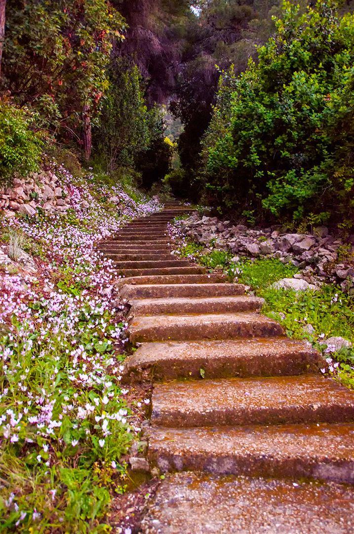 Stairway to Harissa (Darb el Sama)