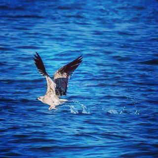 taking off bird blue sea lebanon_hdr ig_lebanon lebanon tripoli ...