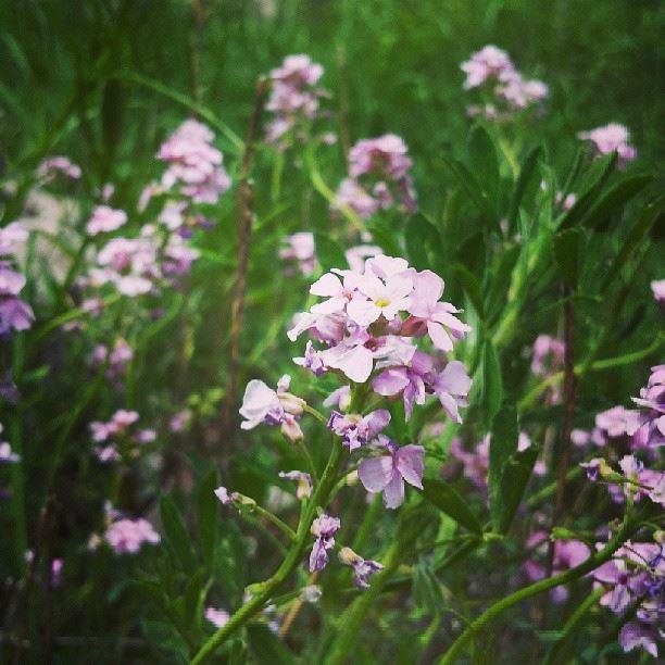 nature green flower mountain sunny day purple beautifull ...