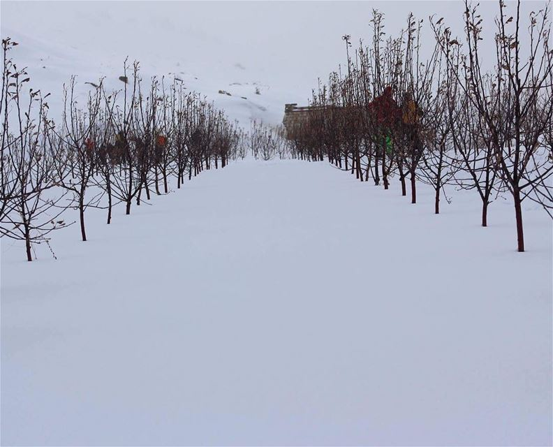 naturelover natureaddict trees winterfashion winterwonderland ... (Falougha, Mont-Liban, Lebanon)