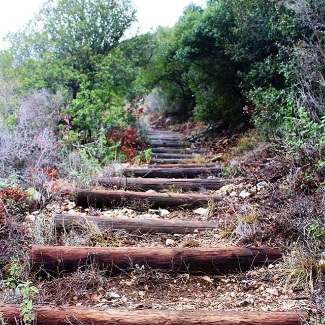 roadtoheaven lebanon_lovers reserve lebanon lebanonweekly ... (Bentael Nature Reserve)