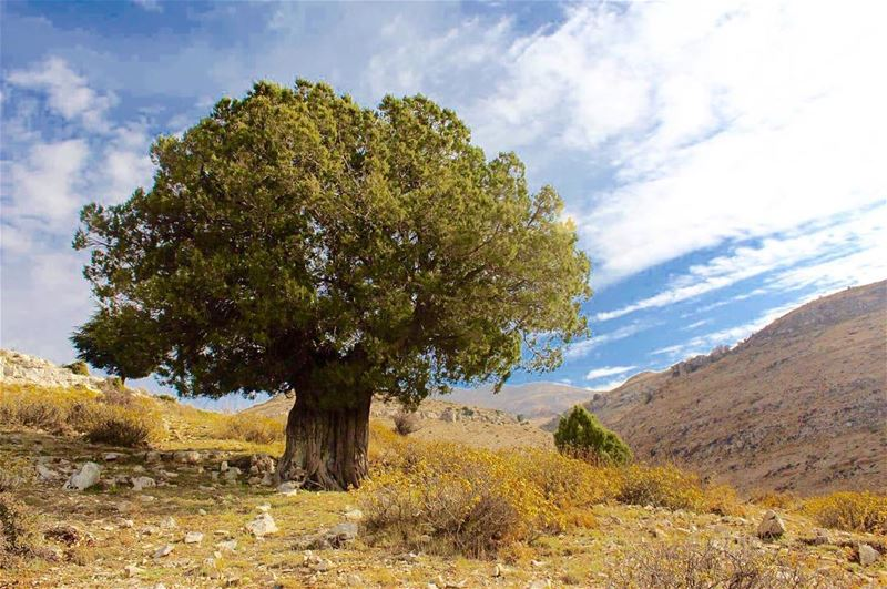 lebanon beatifulplace naturelovers lebanesemountains onlyone tree ... (Sawaki - Meziara)