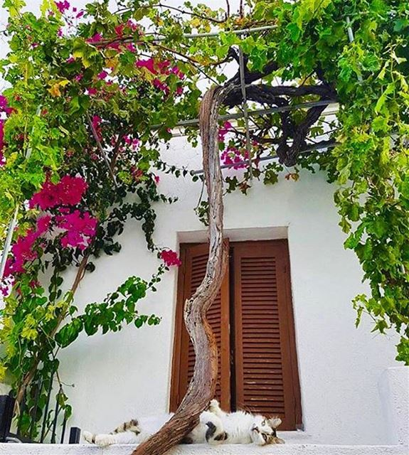relaxation colorful lebanesehouses whitecat takemehome ...