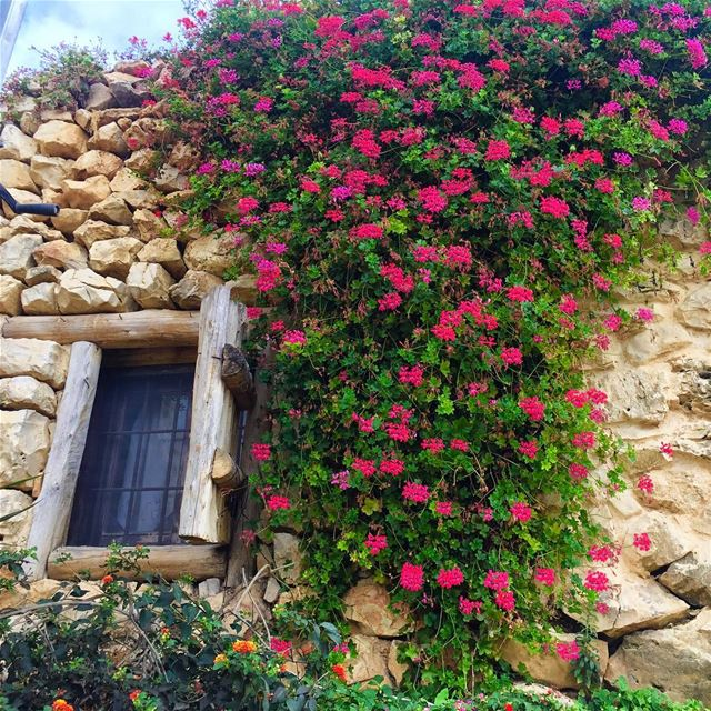 oldbutgold rose tradional window lebanonspotlights lebanontimes ... (Arnaoon Village- Batroun)