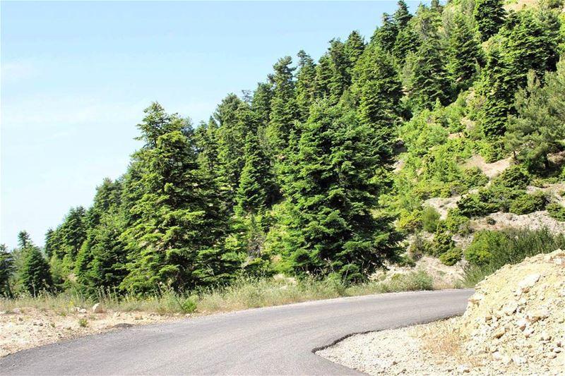 ammou3a liveloveakkar cedars lebanonspotlights greennature greenworld...