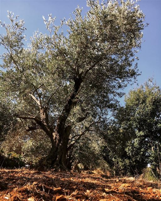 🌿🌳 nature ... (Basateen, Lebanon)