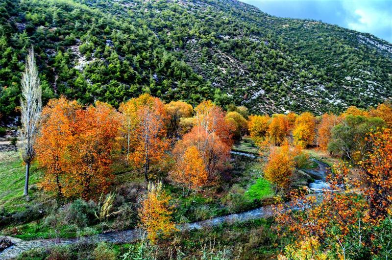 sunday trip forest colorful trees nature naturephotography river... (Nahr Moussa)