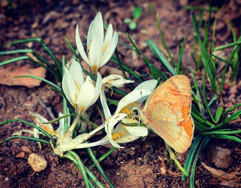 butterfly flowers flower nature natgeo discovery discover broken wing... (Kfarhelda)
