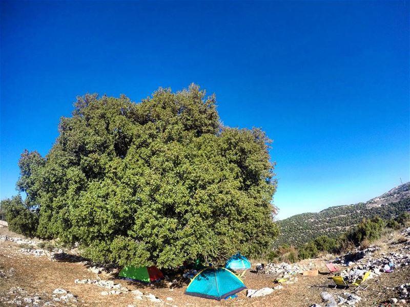sunday camping camp hike hiking gianttree tree tent hammock morning... (Mar Tedros-Mechmech)