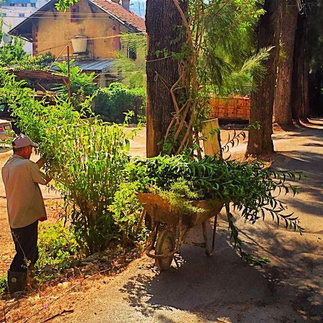 اليوم الجمعة و جمعة واعي عالتشحيل! gardening plants pruning trees ... (Jamhoûr, Mont-Liban, Lebanon)