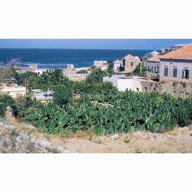 لبنان #جبيل عام ١٩٦٣