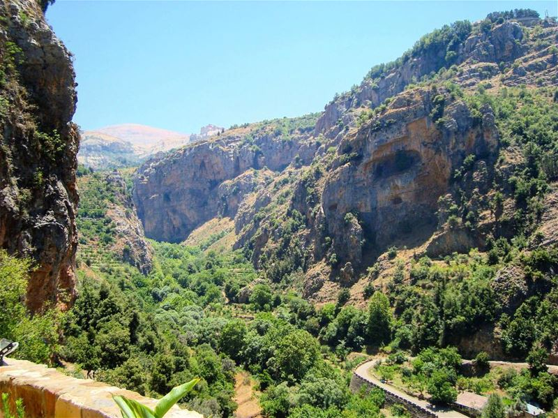 🌲🌿🏞  lebanon  kadisha  valley  nature  naturelovers  natura  natureza ... (Bsharre, Kadisha Valley)