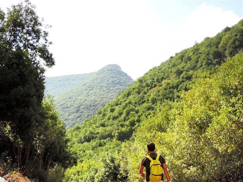 South Lebanon 🌲 lenanon south naturelovers naturelovers nature ... (Zebquine South Lebanon)