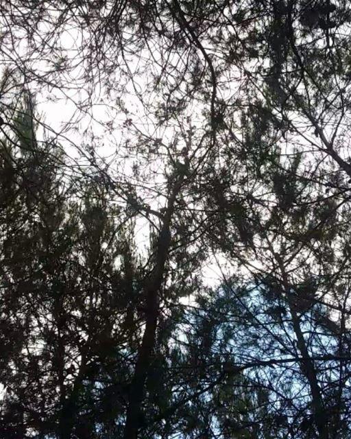 🌲🍃🌄 lebanon meditation meditationtime nature naturehippys ... (Somewhere in Lebanon)