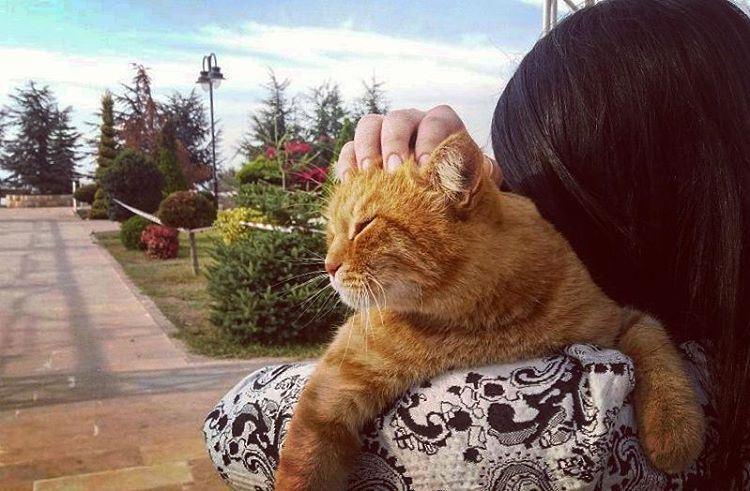Morning hugs. 😽 Beirut lebanon pets cats catsofinstagram ...