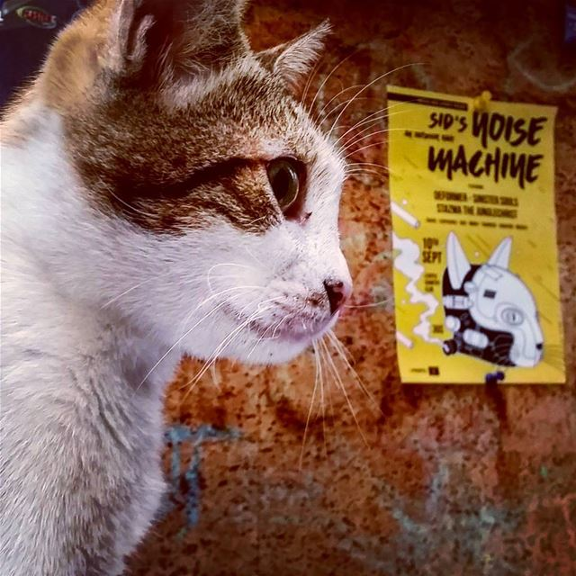 Meow machine.  Lebanon  beirut  marmkhayel  love  cats  cats_of_instagram ... (Radio Beirut)