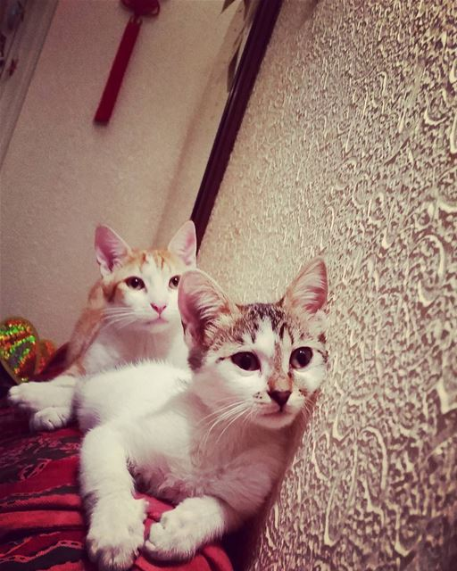 Purr-fect faces. love cats Kenny fuzzy cats_of_instagram lebanon ...