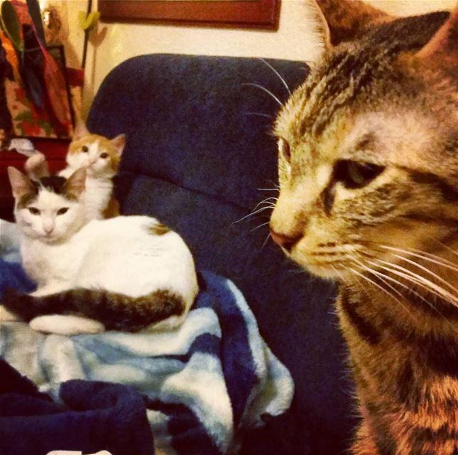 Good morning kitty cats. love animals pets pawproject Beirut lebanon...
