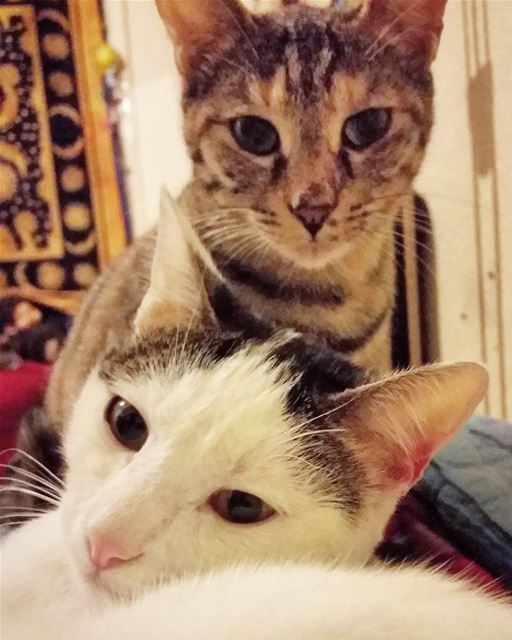 The only two faces I look forward to see everyday. love cats adorable ...
