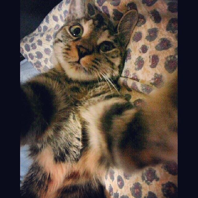 My cat loves taking selfies. adorable pets love cats selfie ...