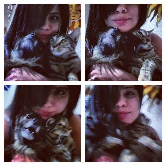 Tried to take a normal picture with them...I failed. cats dogs funny ...