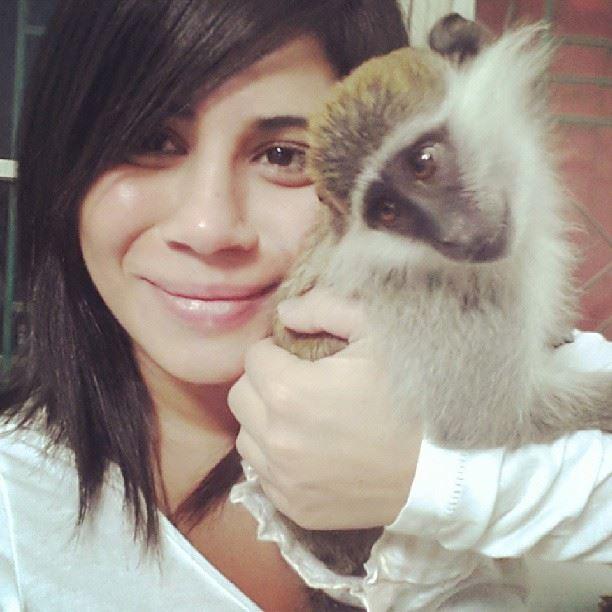 Monkey love animals cute adorable beirut lebanon brunette pets ...