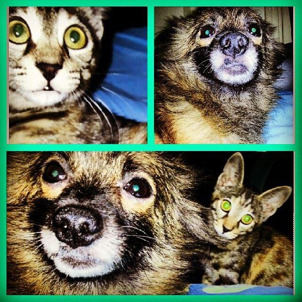 dogs cats love pets friends friendship kitten greeneyes adorable ...