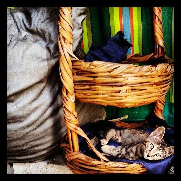 chilling like a boss likeaboss cat cats kitten adorable cute ...