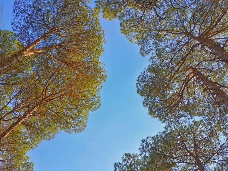 📷🌄🍃🌳 up ⬆ nature_perfection naturelovers ... (El Kfaïr, Al Janub, Lebanon)