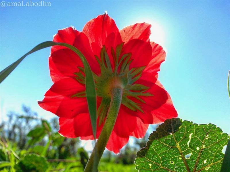 🌷🍃📷👌 flowershot flower flowerslovers flowerlovers greenleaves ...