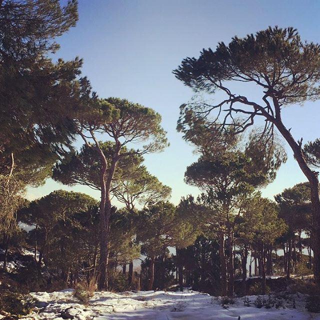 Good morning Lebanon ❤️ love lebanon snow nature lebanonspotlights ... (Naas - Bekfaya)