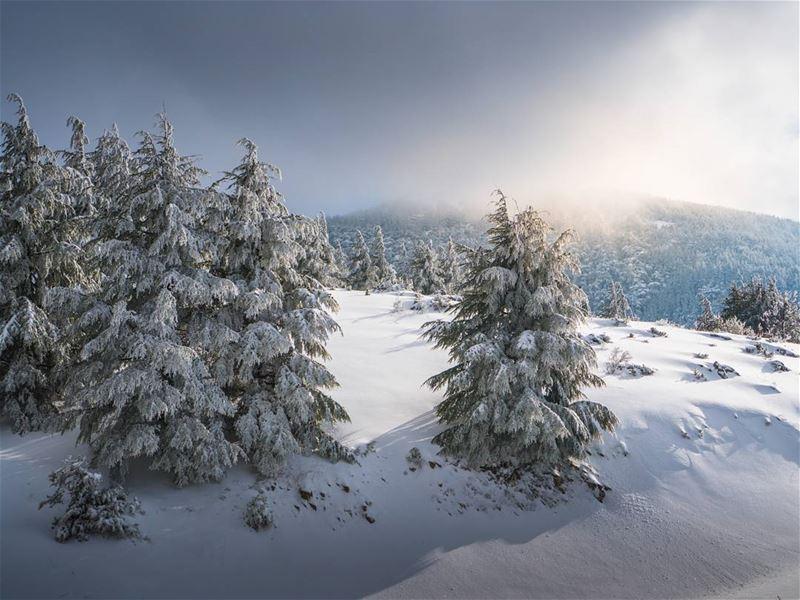 Chouf ❤ lebanon letsgosomewhere ... (Barouk Cedar Forest)