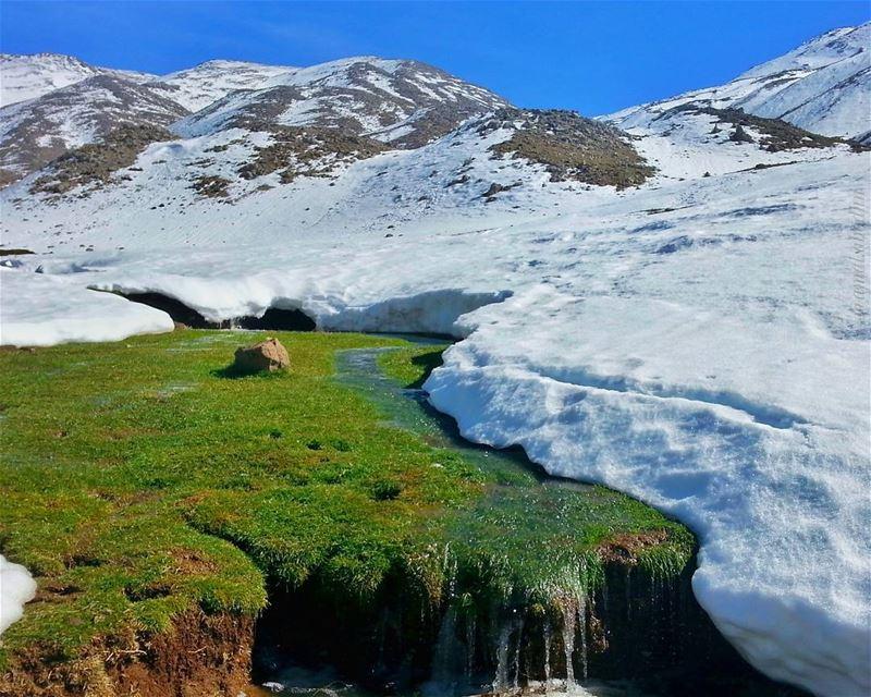 تقرب من أولئك الذين يحتفظون بربيع قلوبهم حتى اوقات العواصف👌📷 snow ... (Mount Hermon)