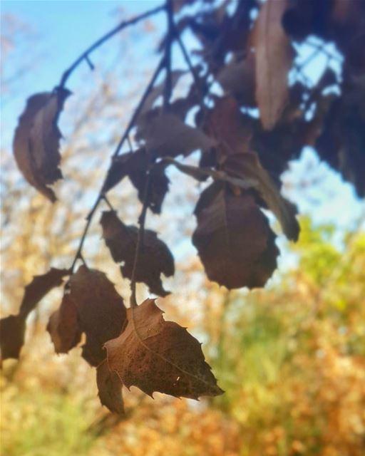 لم يكن ذنْب الخريف، هم كانوا اوراقاً 👌📷 🍃 🌳 autumn autumn🍁 fall ... (Beqaa Valley)