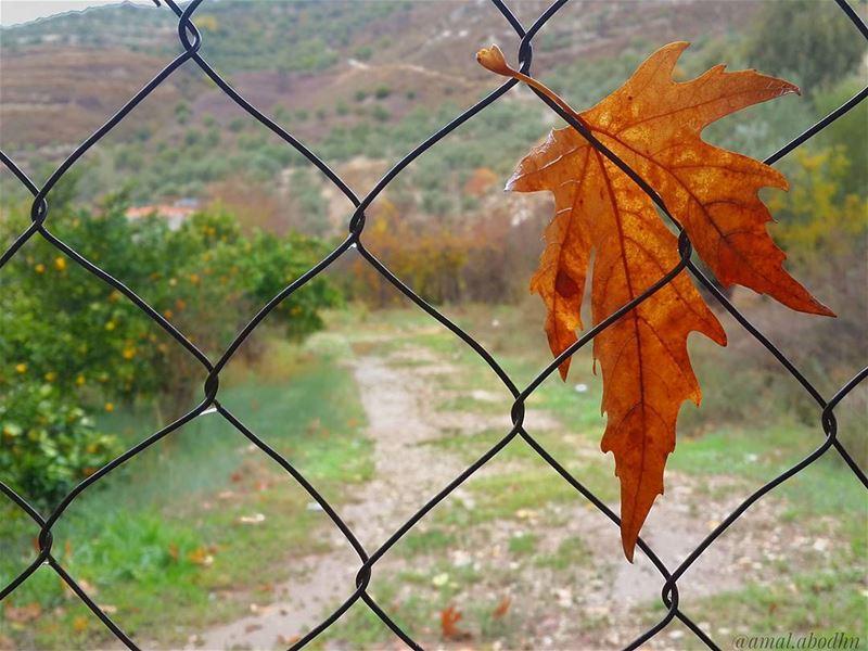 ما بين فصل الخريف،، وفصل الشتاء 👌📷 🍃 🌳 autumn autumn🍁 fall fall🍁 (Hasbani River- Hasbaya)