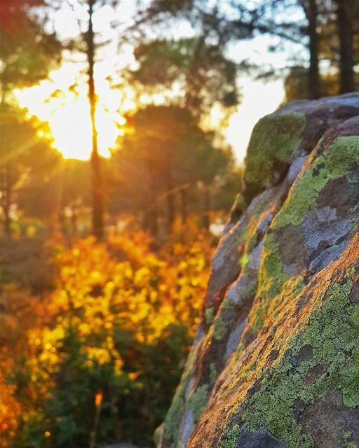 تنوح الشجرة حينما تُقطع،، يعوي الكلب اذا اوجعته، الا الإنسان فهو ينضج حين... (Hasbaya District)